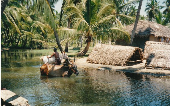 Voyage solidaire en Inde du Sud