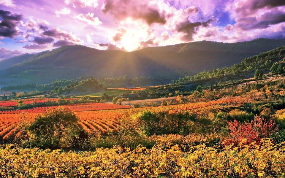 Alsace, coeur de vignoble !