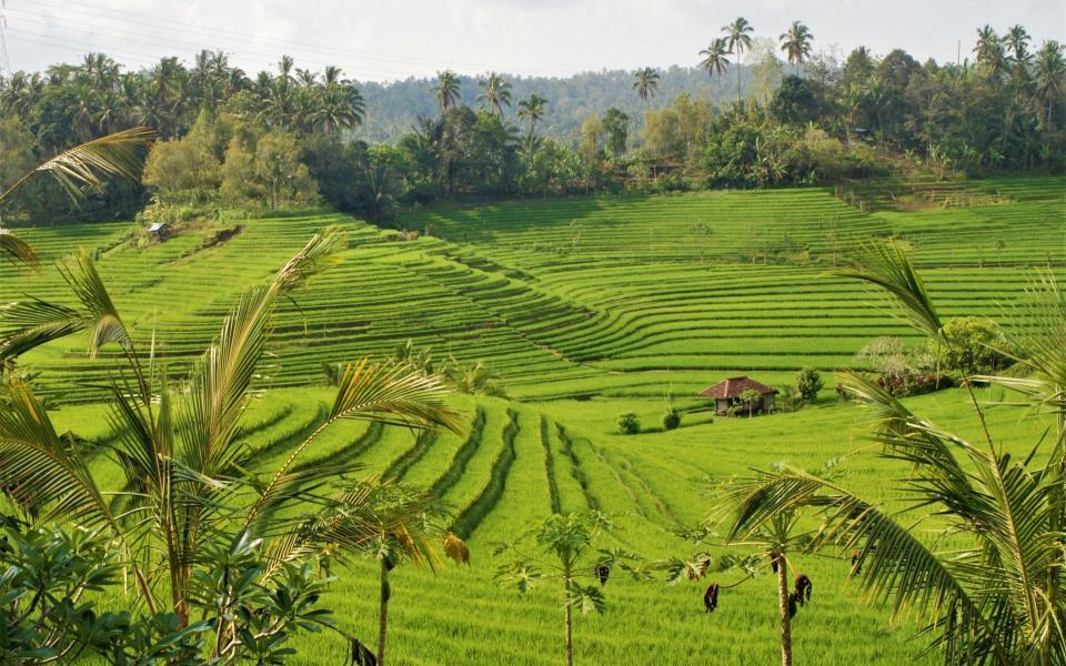 L'île de Java et Bali authentique